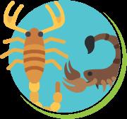 Escorpiões 1.500 espécies