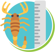 Escorpiões medidas