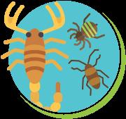 Escorpiões baratas e aranhas