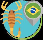 Escorpião amarelo é o 3º mais venenoso do mundo