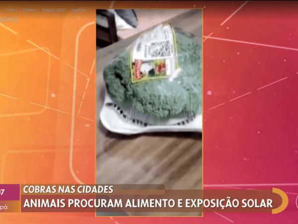 Cobra dentro de embalagem de brócolis