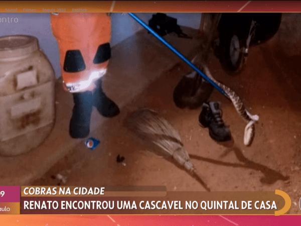 Cobra cascavel capturada por bombeiro