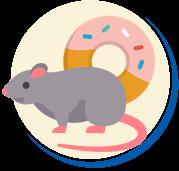 Alimentos preferidos dos ratos
