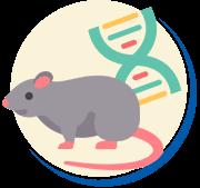DNA dos ratos