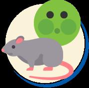 Ratos e doenças