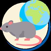 Espécies de ratos no mundo